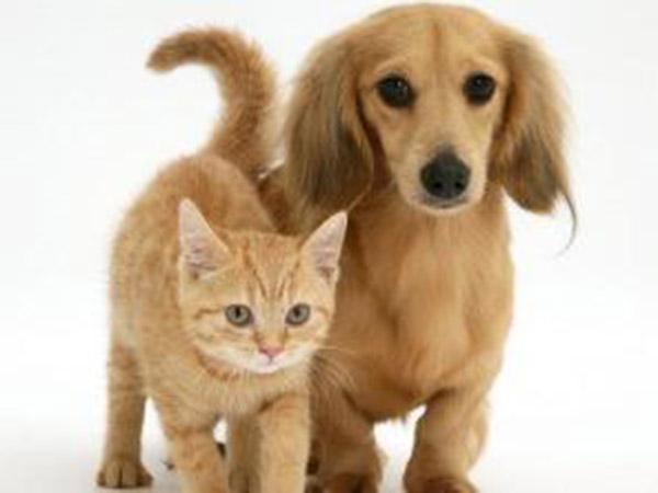 adozione animali:uno sportello per facilitare l' adozione di un cane o di un gatto