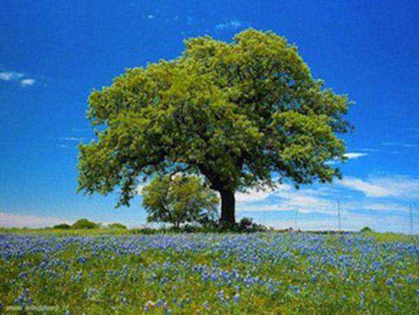 Giornata Nazionale dedicata all'Ambiente organizzata da APRE