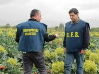 Inquinamento: sequestrati terreni agricoli irrigati con acqua contaminata nel napoletano