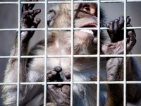 Protezione degli animali: progredisce il rapporto dell'uomo con le altre specie viventi senzienti